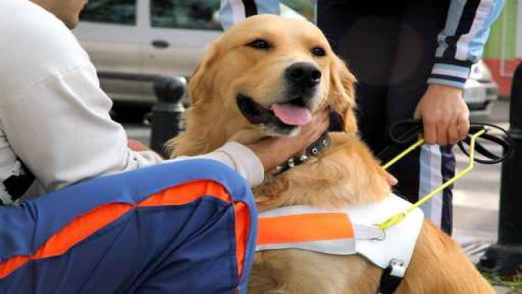 Guide Dog for Austin